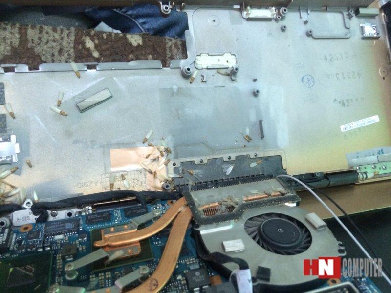 laptop bị kiến vào